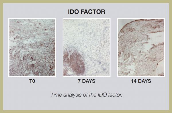 Ido factor